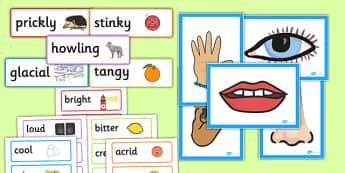 Sensory Vocabulary Display Pack - sensory, vocabulary display, display