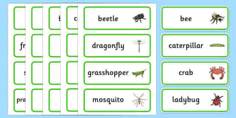 Minibeasts Word Cards - words, keywords, flash cards, visual aid