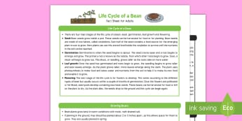Life Cycle of a Bean Fact Sheet for Adults - EYFS, Early Years, KS1, beans, plants, growing, life cycle, seeds, beanstalk, science, Understanding the World