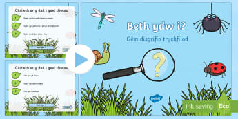 Pwerpwynt Trychfilod - Beth ydw i? - Trychfilod, Minibeasts, insects, Wales, display, Welsh, Gwybodaeth a Dealltwriaeth o'r Byd, Gwyboda