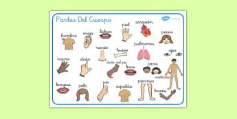 Tapiz de vocabulario - Mi cuerpo - las partes del cuerpo, esquema, vocabulario