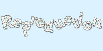 'Reproduction' Display Lettering - reproduction, reproduction lettering, reproduction display word, reproduction display, living things display, ks2 science