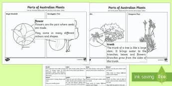 The Parts of Australian Plants Activity Sheet - Australian Curriculum Biological sciences, plant parts, Australian plants, Australian plant parts, p