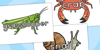 Minibeasts Topic Words on Topic Images - topic display, images