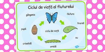 Ciclul de viață la fluture - Planșă cu imagini și cuvinte