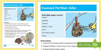 Cyfarwyddiadau Sut i Wneud Porthwr Adar Taflen Weithgaredd - WL Social Media Requests in Welsh FP (HIGH PRIORITY) darllen, deall, cyfarwyddiadau, porthwr adar, a
