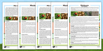 Minibeasts Differentiated Reading Comprehension Activity Romanian Translation - romanian, Reading, comprehension, questions, ask, answer, minibeasts, habitat, insects, invertebrates, shell, fly, wings, legs, pollen, crawl, bumblebee, dragonfly, worm,