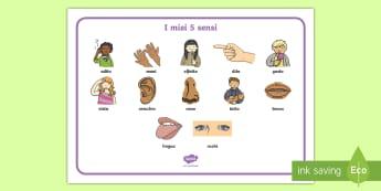 I miei 5 Sensi Vocabolario Illustrato - il, mio, corpo, vocabolario, illustrato, nomi, vocaboli, illustrazioni, scienze, italiano, italian,