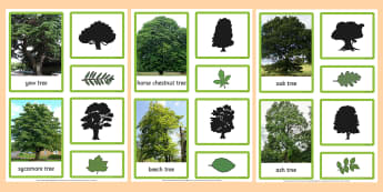 British Trees and Leaves Three Part Matching Cards - british trees, trees, leaves, matching cards, match