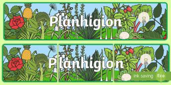 Planhigion Baner Arddangosfa - planhigion, plants, growing, tyfu, yr ardd, baner arddangosfa, display banner,Welsh
