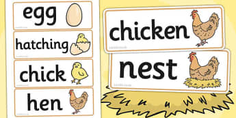 Life Cycle of a Hen Display Photos - Hen, life cycle, lifecycle, Word cards, Word Card, flashcard, flashcards, plant growth, Hen, egg, chick, hatch, Life cycle, Foundation stage, knowledge and understanding of the world, investigation, living things