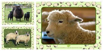 Sheep Photo PowerPoint - sheep, photo powerpoint, display, photo