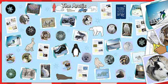 Ready Made Arctic Display Pack - ready made, arctic, display