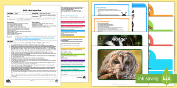 EYFS Night-Time in the Wood Adult Input Plan and Resource Pack - EYFS Owlets, Owl Babies, Martin Waddell,  owl, nature, british, wildlife, nocturnal, night, animals,
