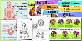 Year 6 Transporting Nutrients Teaching Pack - healthy eating