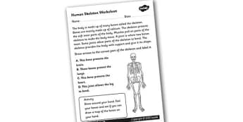 Human Skeleton Worksheet - the human skeleton, our bodies, how our bodies work, bones, human bones, what the skeleton does, ks2 biology, ks2 science