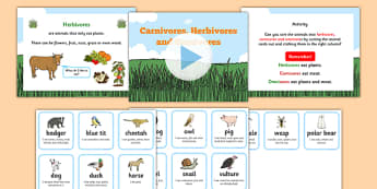 Identifying Herbivores Carnivores and Omnivores Powerpoint Task Setter and Activity, carnivoures, herbivores, omnivores