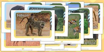 Safari Animals Display Photos - Display Posters, Safari,  A4, display, safari, lion, cheetah, puma, jaguar, rhino, hippo, elephant