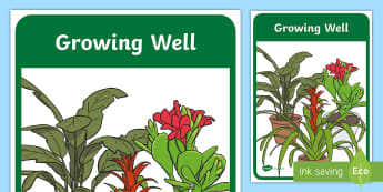 Growing Well Foundation Year Biological Sciences Book Cover - Australian Curriculum, Biological sciences, primary connection, prep, reception, plants, science dis