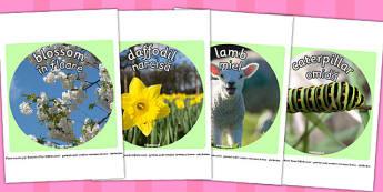 Spring Display Photo Cut Outs Romanian Translation - seasons