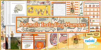 PlanIt - Science Year 4 - Animals Including Humans Unit Additional Resources