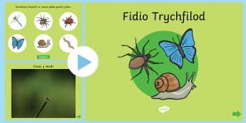 Pwerpwynt Fidio Trychfilod - Trychfilod, Minibeasts, insects, Wales, display, Welsh, Gwybodaeth a Dealltwriaeth o'r Byd, Gwyboda