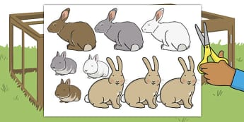 Fluffy Bunny Cut-Outs - fluffy, bunny, cut outs, cut, outs, rabbit