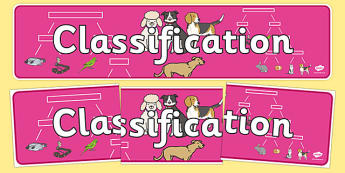 Classification Display Banner - classification banner, classifying animals, classification display, classification display header, bird classification, ks2