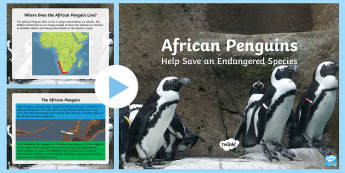 African Penguins Help Save an Endangered Species PowerPoint - South Africa Youth Day 16 June , make a difference, save an endangered species, penguins, African pe