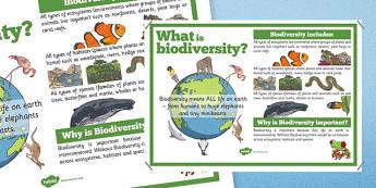 Biodiversity Information Display Poster - Biodiversity, Green schools environment, display, poster, information, green, flag, nature