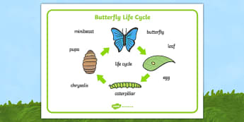 Butterfly Life Cycle Word Mat (Minibeasts) - Word mat, Chrysalis, Caterpillar, Egg, Minibeasts, Topic, Foundation stage, knowledge and understanding of the world, investigation, living things, snail, bee, ladybird, butterfly, spider