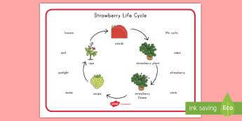 Strawberry Life Cycle Word Mat - strawberries, strawberry plants, strawberry farming, strawberry picking, strawberry plant life cycle