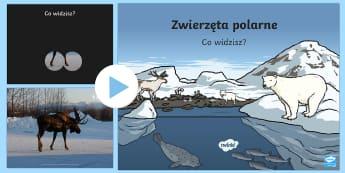 Prezentacja PowerPoint Zwierzęta polarne - arktyka, antarktyda, foka, mors, śnieg, lód, niedźwiedź polarny, sowa śnieżna, łoś, renifer,