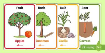 Edible Plant Parts Display Posters - editable plant parts display posters, editable, plant, plants, parts, display, poster, sign, tree, green, fruit, fruits, bananas, apple, orange, pear