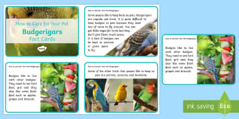 How to Care for Your Pet Budgerigar Fact Cards - birds, keeping pets, animal welfare, budgie, budgies, petcare, pet care, pet bird,