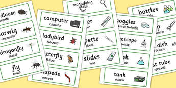 Minibeasts Investigation Play Research Lab Word Cards Romanian Translation
