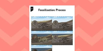 Fossilisation Process Cards - fossilisation, process, cards