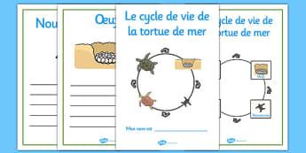 Le cycle de vie de la tortue de mer French - french, sea turtle, life cycle, workbook, sea, turtle