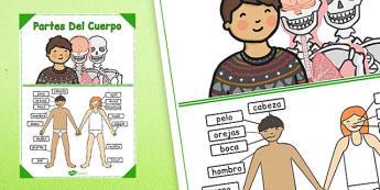 Póster Las partes del cuerpo - las partes del cuerpo