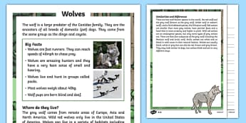 Wolves Differentiated Reading Comprehension Activity