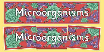 Micro-Organisms Display Banner - microorganisms, micro-organisms, microorganisms display banner, microorganisms banner, organisms, organisms display, ks2