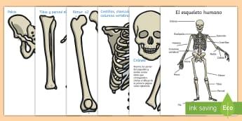 Imágenes de exposición: El esqueleto humano - humano, esqueleto, exponer, exposición, decorar, decoración, ciencias, naturales, ciencias de la n