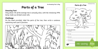 Parts of a Tree Activity Sheet - Amazing Fact Of The Day, activity sheets, powerpoint, starter, morning activity, April, parts of a t