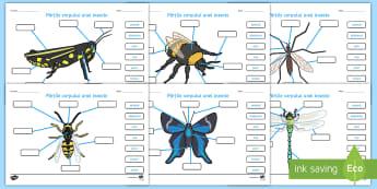 Identifică părțile unei insecte  Fișă de lucru - t-t-982-parts-of-an-insect-labelling-worksheets  Fișă de lucru, insecte, părțile corpului insect