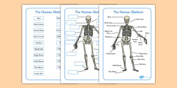 Human Skeleton Labelling Sheets (Common Names) - human skeleton labelling sheets, bones of the body, bones, body, human body, human skeleton, skeleton, labelling, sheets, worksheet, skull, hands, ribs, kneecap