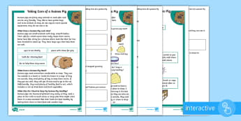 KS1 How To Look After A Guinea Pig Differentiated Comprehension Go Respond Activity Sheets - Pets, pet, EYFS, KS1, take, care, look, after, family, member, members, vet, vet surgery, surgery, i