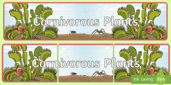 Carnivorous Plants Display Banner - carnivorous plants, meat eaters, carnivore, Venus flytrap, Venus fly trap, pitcher plant, plants,Aus