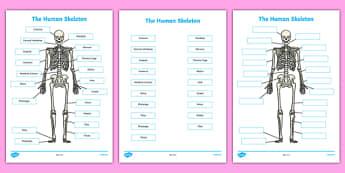 Human Skeleton Labelling Sheets Scientific Names - body, labels