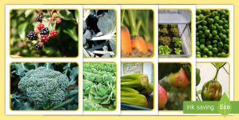 Growing Fruit and Vegetables Photo Cards Photo Pack - EYFS Parks and Gardens, Garden, Fruit, Vegetables, Plant, Growing, allotment, food.