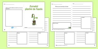 Jurnalul plantei de fasole - Fișă de lucru